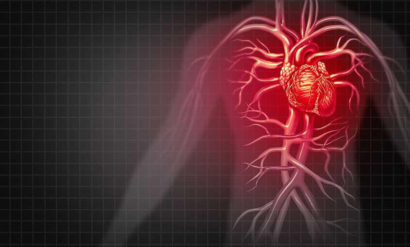 The Cardiovascular System course image