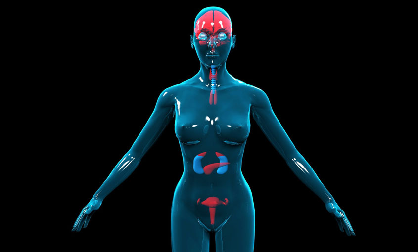 The Endocrine System course image