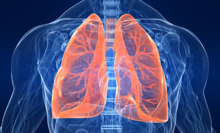The Respiratory System course image