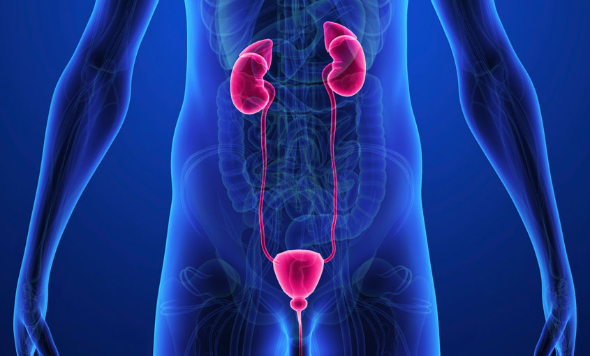 Urinary and Renal System course image
