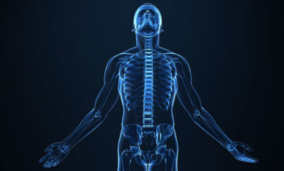 Musculoskeletal system course image