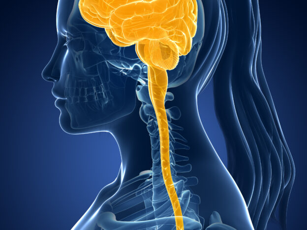 Central Nervous System course image